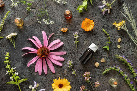 Bottles of essential oil with frankincense, calendula, yarrow, echinacea and other herbs on a dark background