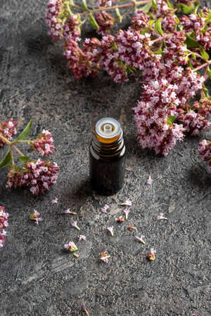 A dark bottle of essential oil with blooming oregano twigs on a gray background Banque d'images