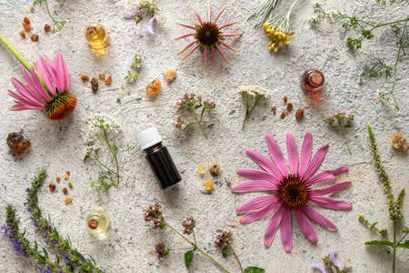 Bottles of essential oil with frankincense, hyssop, blooming oregano, echinacea and other herbs on a bright background Banque d'images