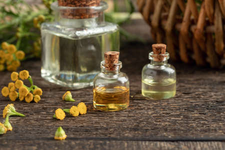 Bottles of essential oil with fresh blooming common tansy, or Tanacetum vulgare plant