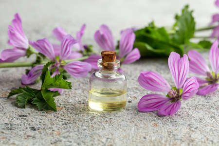 A bottle of essential oil with fresh blooming malva sylvestris plant on a white background Standard-Bild