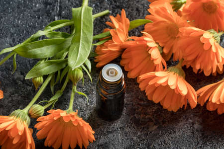 A dark bottle of essential oil with fresh calendula flowers on a gray background