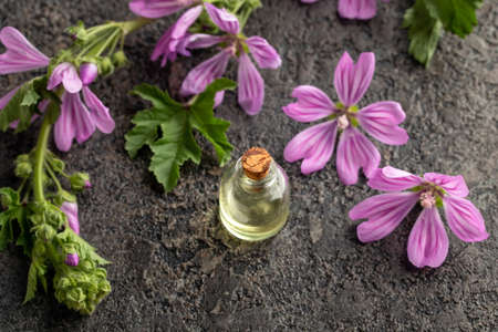 A bottle of essential ol with fresh mallow or Malva sylvestris plant