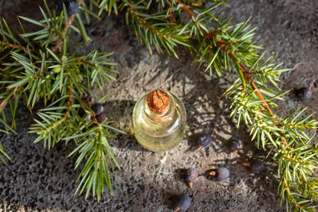 A bottle of essential oil with fresh juniper twigs and berries