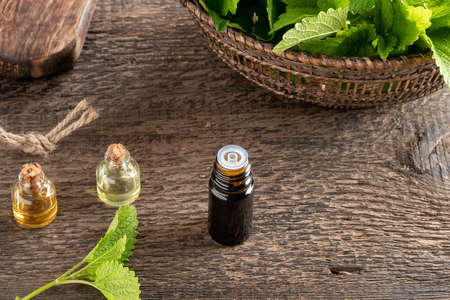 Essential oil bottle with fresh melissa leaves, with copy space