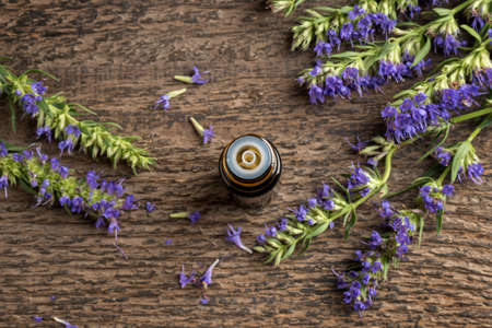 A dark bottle of essential oil with fresh blooming hyssop
