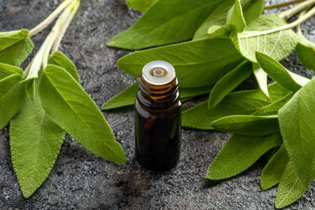 A bottle of essential oil with fresh sage plant