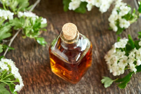 A bottle of herbal tincture with hawthorn flowers and leaves in spring