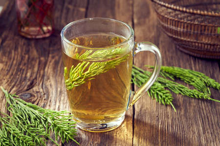 A cup of herbal tea with fresh horsetaile medicinal plant Standard-Bild