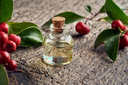 A bottle of essential oil with wintergreen leaves and berries on a wooden table Standard-Bild
