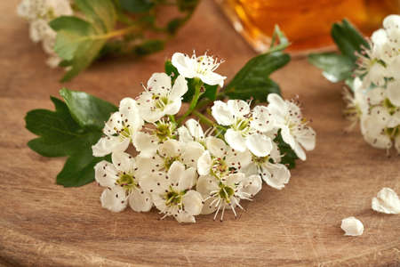 Blooming hawthorn branches in spring, with a bottle of herbal tincture in the background Standard-Bild
