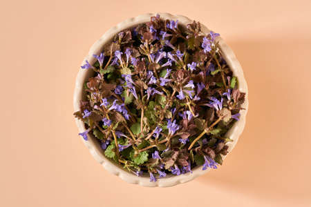 Fresh blooming ground-ivy medicinal plant in a bowl on orange pastel background, top view