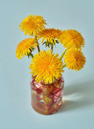 Fresh dandelion flowers in a vase on blue pastel background