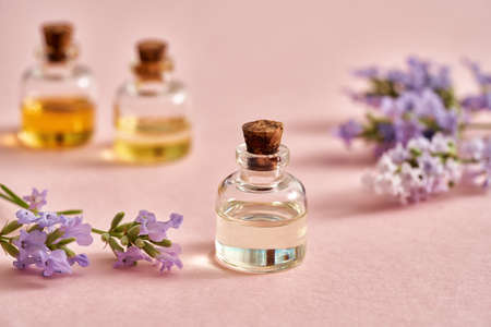 A bottle of essential oil with fresh blooming lavender on pastel pink background. Aromatherapy or alternative medicine concept.