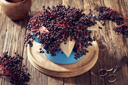 Fresh black elder or Sambucus nigra berries, used in herbal medicine, in a blue pot Stock Photo