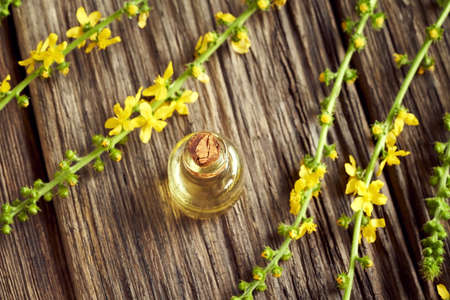 Aromatherapy essential oil bottle with fresh blooming agrimony plant on a table Archivio Fotografico