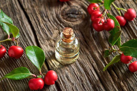 A bottle of essential oil with wintergreen plant on a rustic wooden background