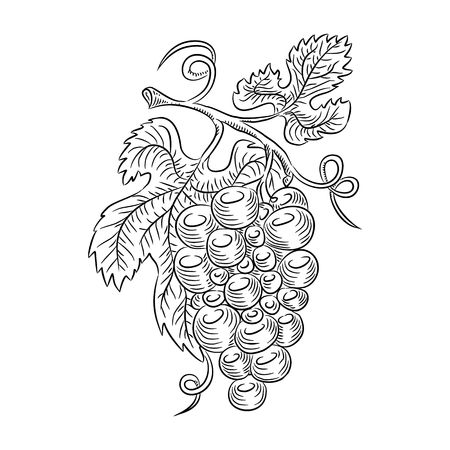 grapes line Vector