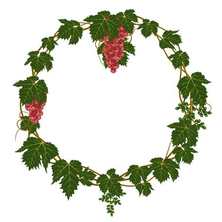 grapes cyrcle