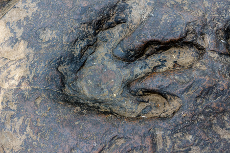 Real dinosaur footprint , Thailand.