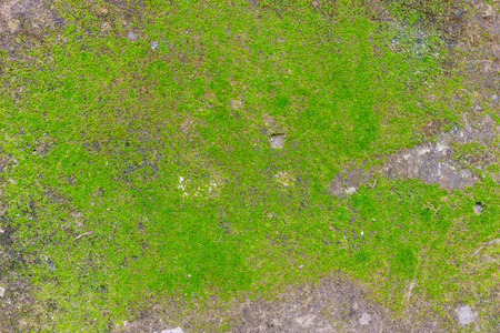 Green moss on old wall Stock Photo