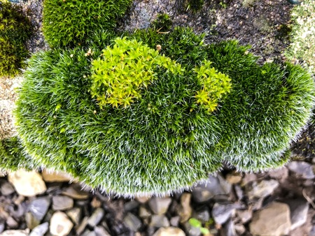 Moss green grass and lichen grows on stone rock with warm light