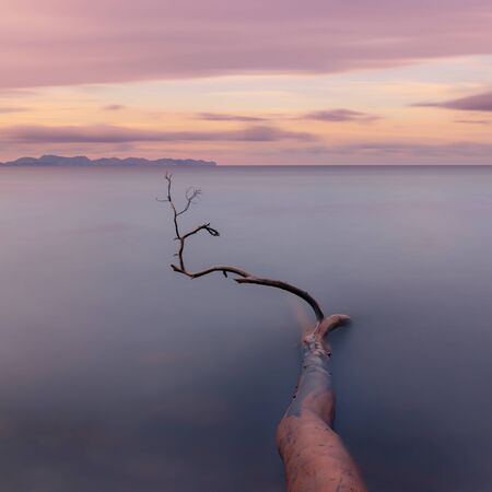 Fallen tree partially submerged in sea on Betlam beach, with smooth sea, sunset, colourful sky and view of Cap De Formentor in distance, Mallorca, Spain. Banco de Imagens