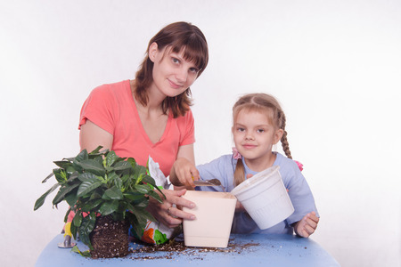 transplanted: Mom and daughter five-year houseplant transplanted from one pot to another