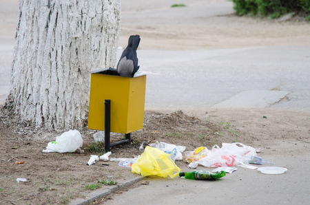 throws: Crow digs in a garbage urn, in search of food, throwing trash on the pavement