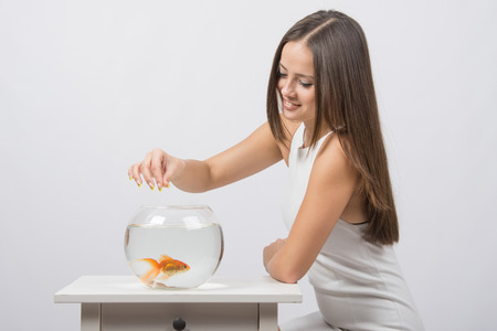 aquarist: A young girl sits next to a round aquarium in which swimming goldfish