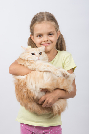 six year old: Six year old girl is holding adult domestic cat