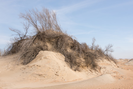 abrasion: Sand dune with withered shrubs on it