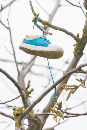 shoe string: On a tree branch hanging shoe girl