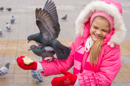 fight hunger: The girl dodged pigeons, which are fighting for bread Stock Photo