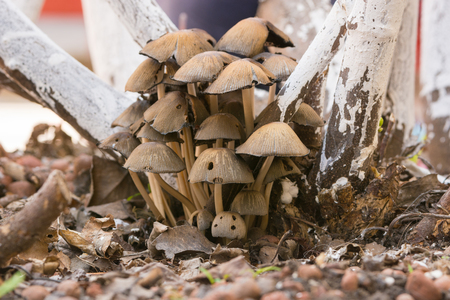 Fungus mushrooms frowned under a tree Stock Photo