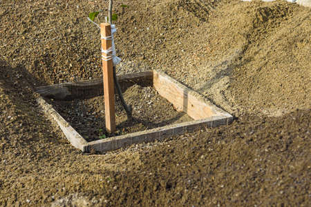 A tree seedling is planted in a hole, around a heap of sifted earth