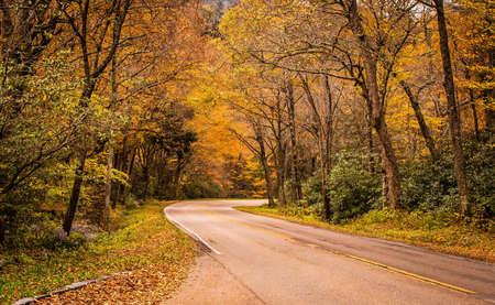The color in nature trail Фото со стока