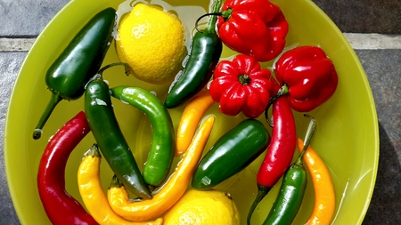 gastro: Colorful Chili Pepper