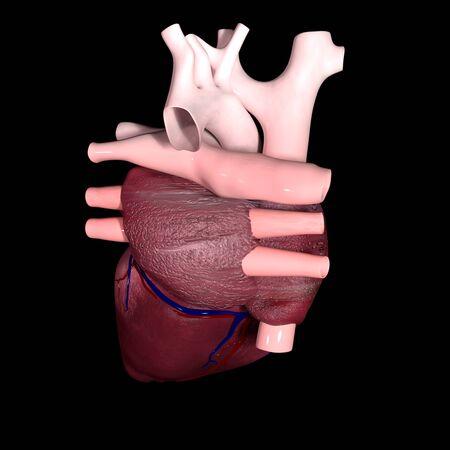 This is a 3d illustration of The Human Heart in back view Stockfoto