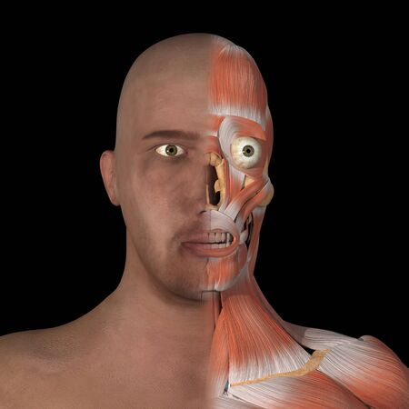 This is a 3d illustration of half facial muscles Stockfoto