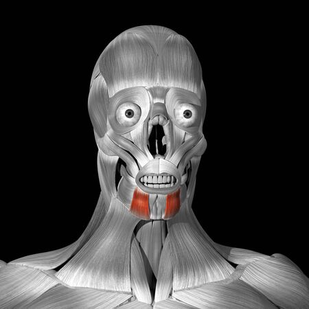 This is a 3d illustration of the depressor anguli oris muscles