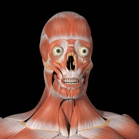This is a 3d illustration of the facial muscles front view