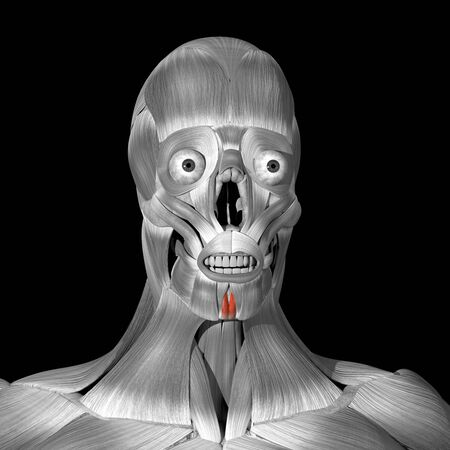 This is a 3d illustration of the mentalis muscles