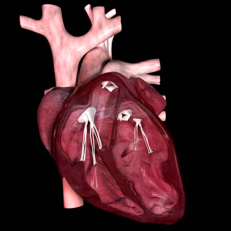 This 3d illustration shows an inner section of the heart