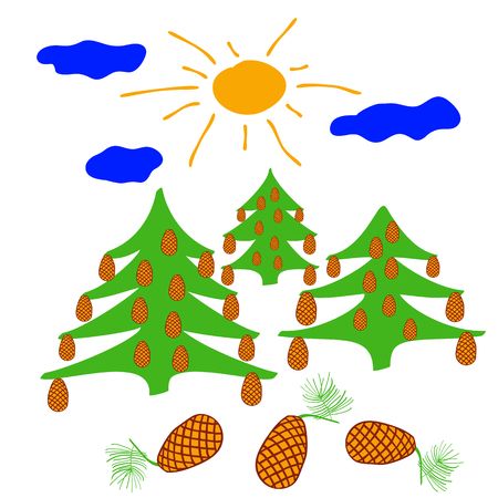coniferous tree: coniferous tree with big cones illuminated by the sun. on a sunny day beautiful tree covered with cones