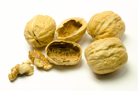 white, nut, nutshell, walnut Stock Photo