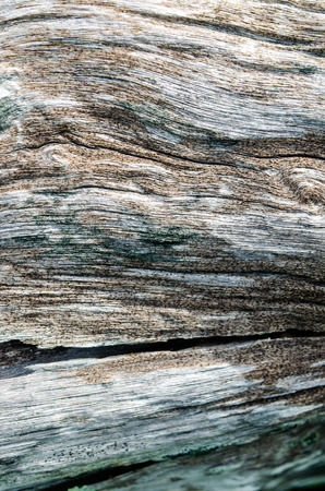 Old wood texture. Abstract background