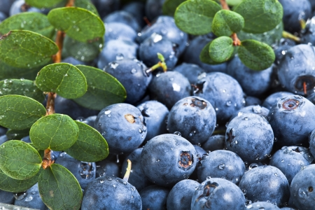 blueberries with water drops Stock Photo