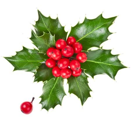 christmas holly Ilex isolated on white background