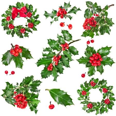 raminho: Cole��o da decora��o de Natal do azevinho europeu ilex isolado no fundo branco Banco de Imagens